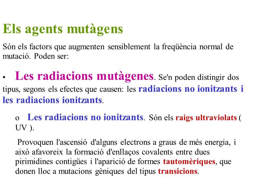Els agents mutàgensSón els factors que augmenten sensiblement la freqüència normal de mutació. Poden ser:
