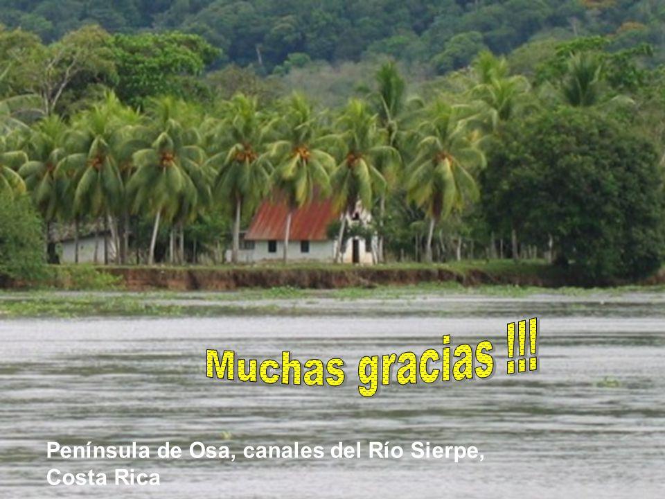 Muchas gracias !!! Península de Osa, canales del Río Sierpe,