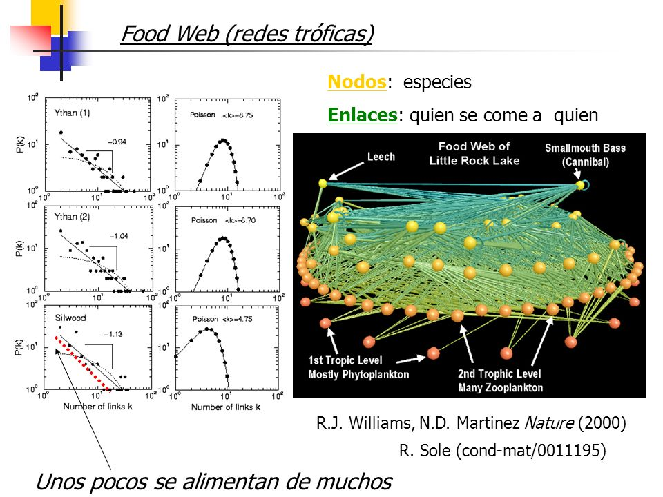 Food Web (redes tróficas)