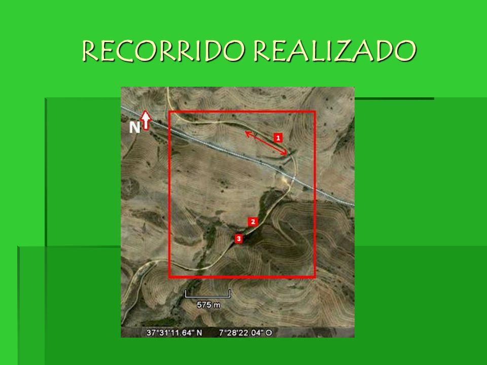 RECORRIDO REALIZADO