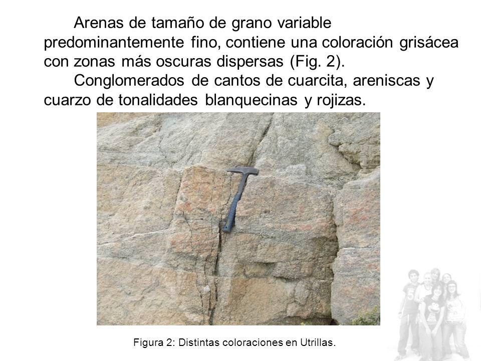 Arenas de tamaño de grano variable predominantemente fino, contiene una coloración grisácea con zonas más oscuras dispersas (Fig. 2). Conglomerados de cantos de cuarcita, areniscas y cuarzo de tonalidades blanquecinas y rojizas.