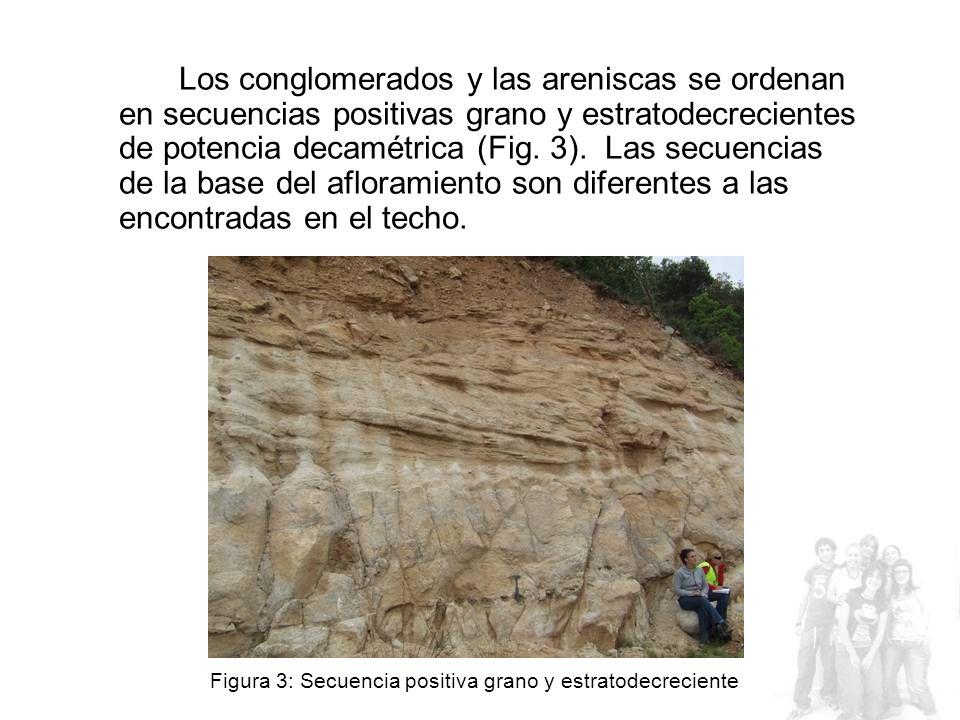 Los conglomerados y las areniscas se ordenan en secuencias positivas grano y estratodecrecientes de potencia decamétrica (Fig. 3). Las secuencias de la base del afloramiento son diferentes a las encontradas en el techo.