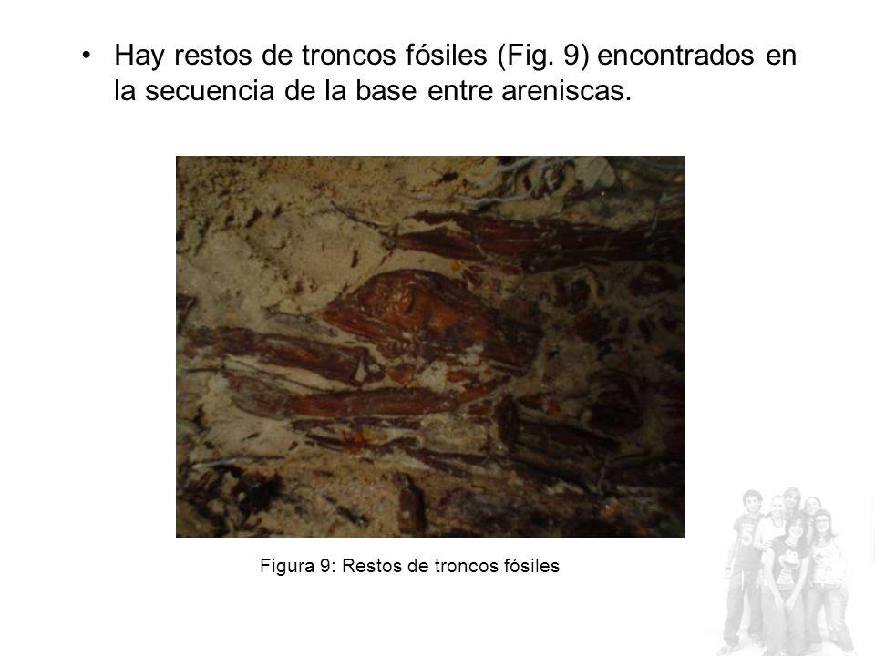 Hay restos de troncos fósiles (Fig