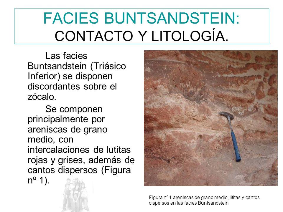 FACIES BUNTSANDSTEIN: CONTACTO Y LITOLOGÍA.