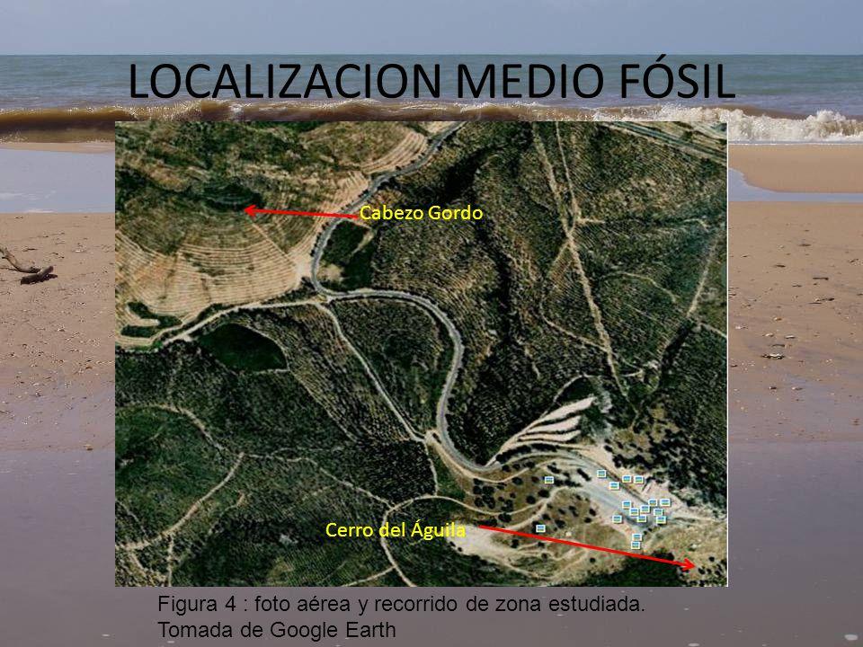 LOCALIZACION MEDIO FÓSIL
