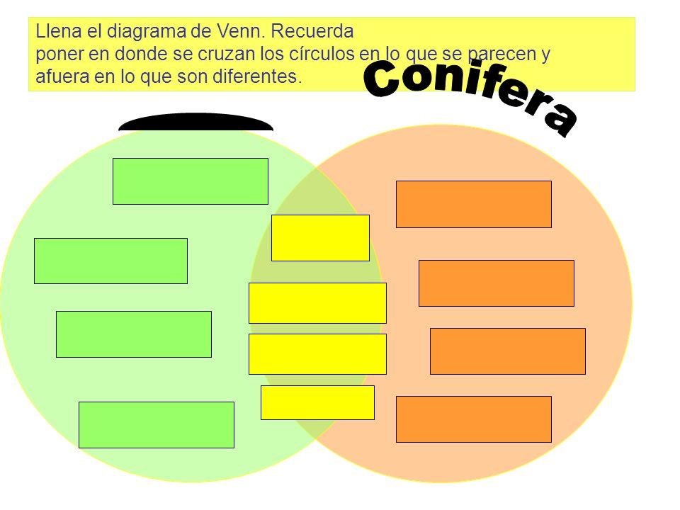 Conifera Llena el diagrama de Venn. Recuerda