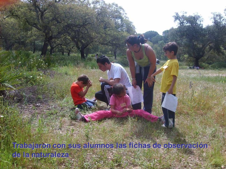 Trabajaron con sus alumnos las fichas de observación de la naturaleza
