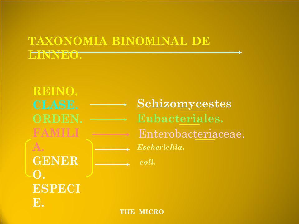 TAXONOMIA BINOMINAL DE LINNEO.