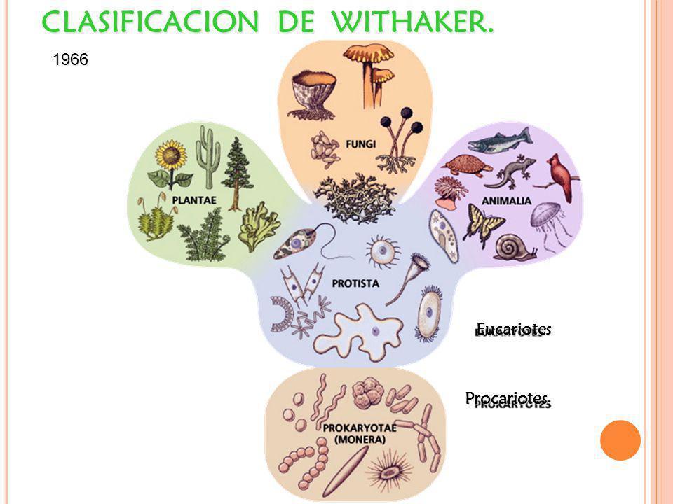 CLASIFICACION DE WITHAKER.