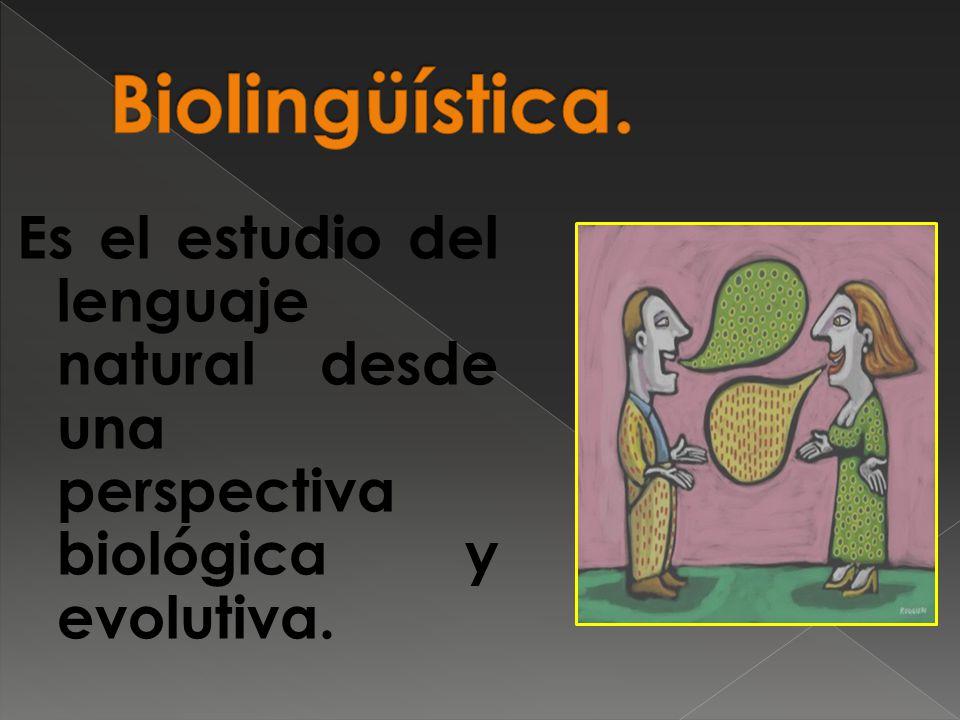 Biolingüística. Es el estudio del lenguaje natural desde una perspectiva biológica y evolutiva.