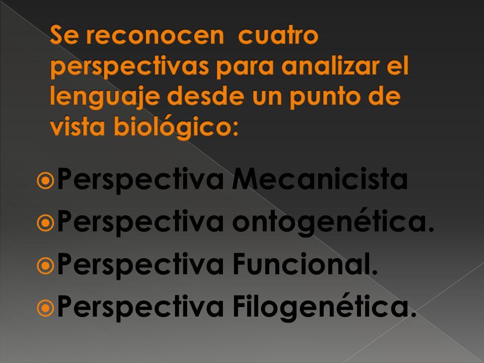Perspectiva Mecanicista Perspectiva ontogenética.