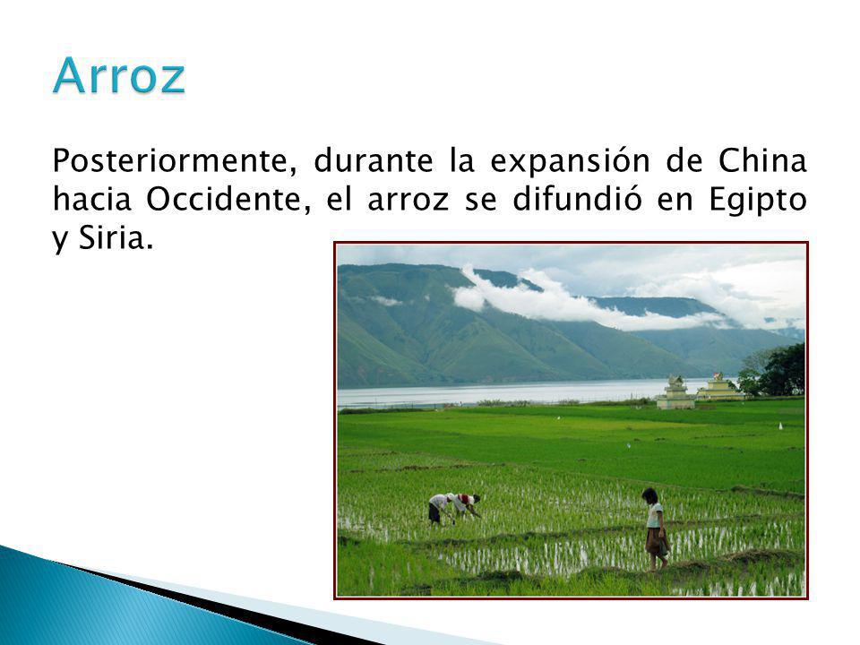Arroz Posteriormente, durante la expansión de China hacia Occidente, el arroz se difundió en Egipto y Siria.