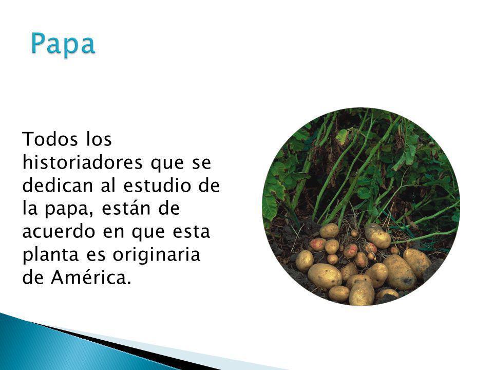 Papa Todos los historiadores que se dedican al estudio de la papa, están de acuerdo en que esta planta es originaria de América.