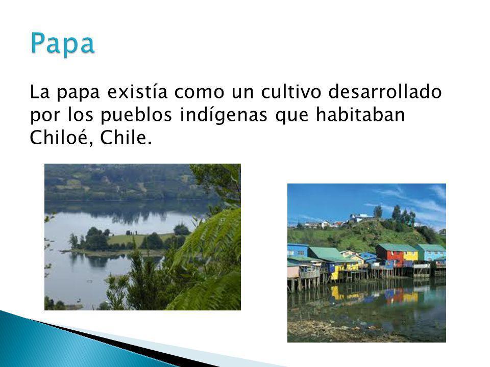 Papa La papa existía como un cultivo desarrollado por los pueblos indígenas que habitaban Chiloé, Chile.