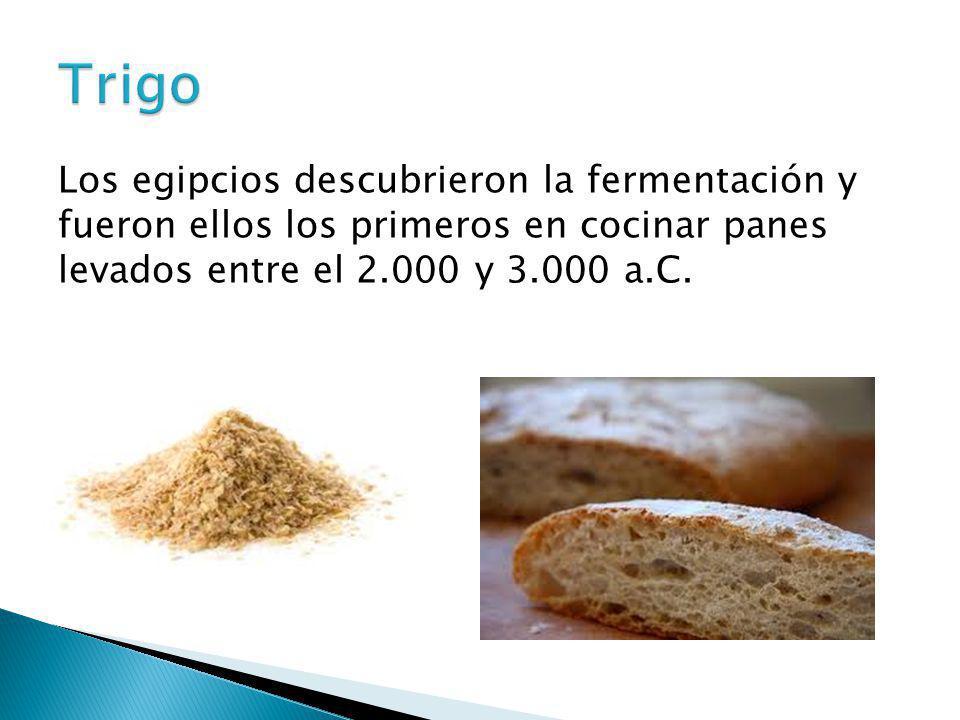 Trigo Los egipcios descubrieron la fermentación y fueron ellos los primeros en cocinar panes levados entre el 2.000 y 3.000 a.C.