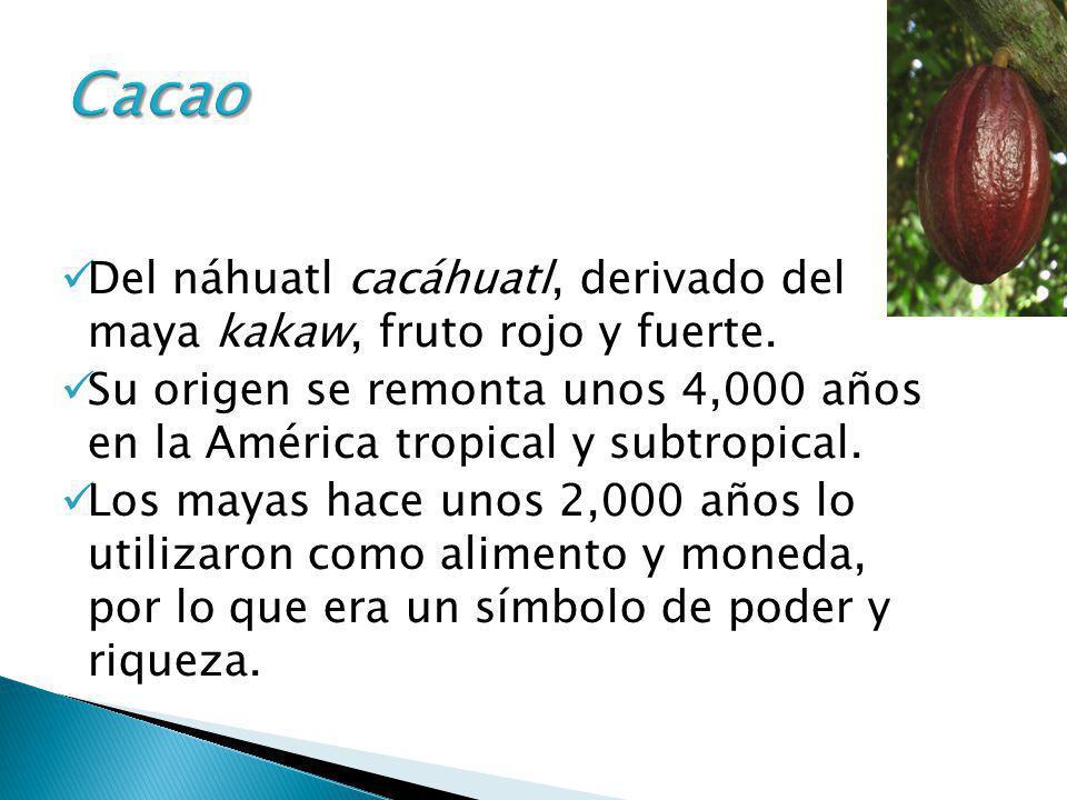 Cacao Del náhuatl cacáhuatl, derivado del maya kakaw, fruto rojo y fuerte.