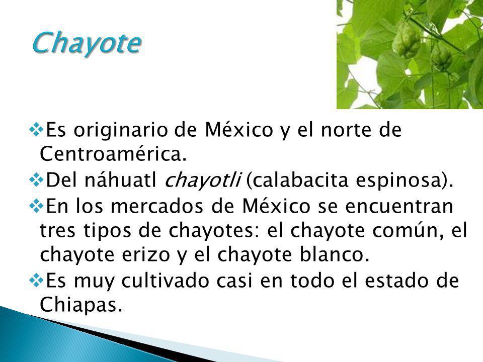 Chayote Es originario de México y el norte de Centroamérica.