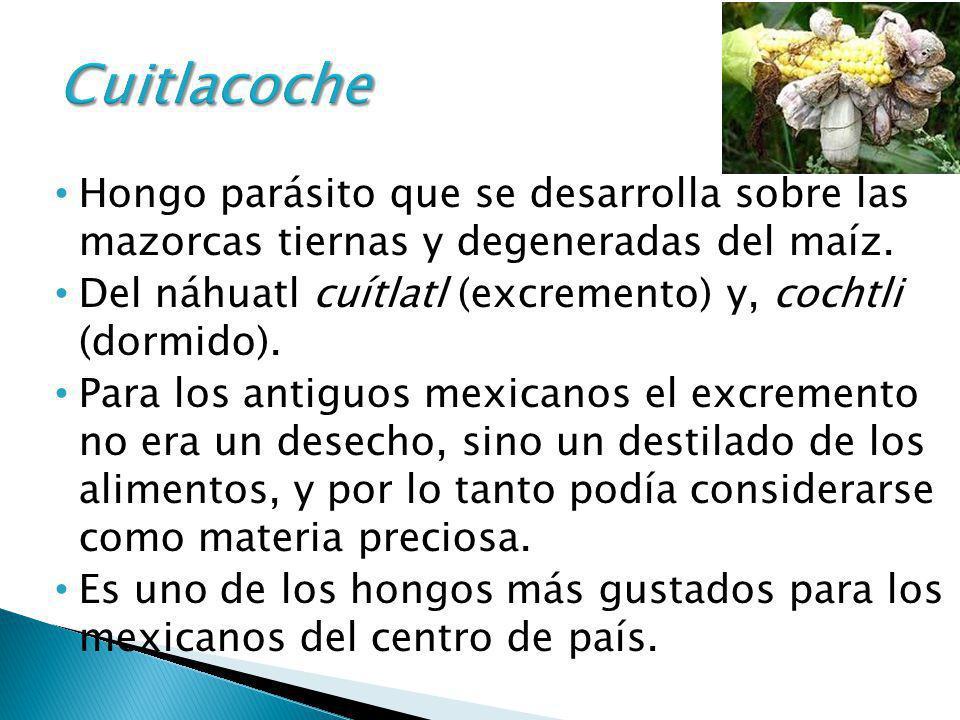 Cuitlacoche Hongo parásito que se desarrolla sobre las mazorcas tiernas y degeneradas del maíz.