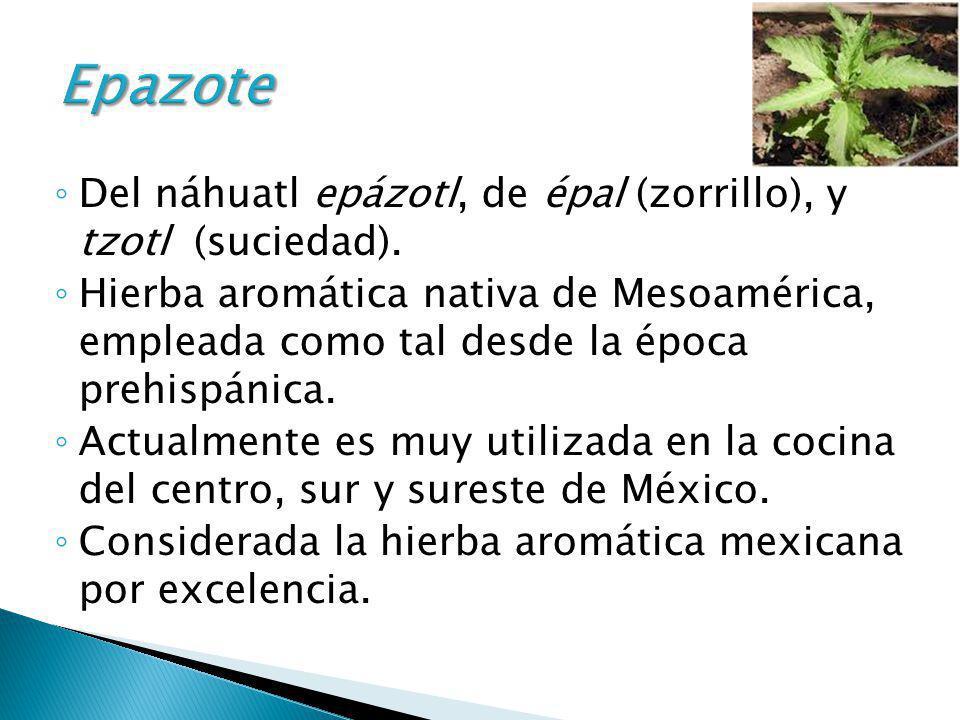 Epazote Del náhuatl epázotl, de épal (zorrillo), y tzotl (suciedad).