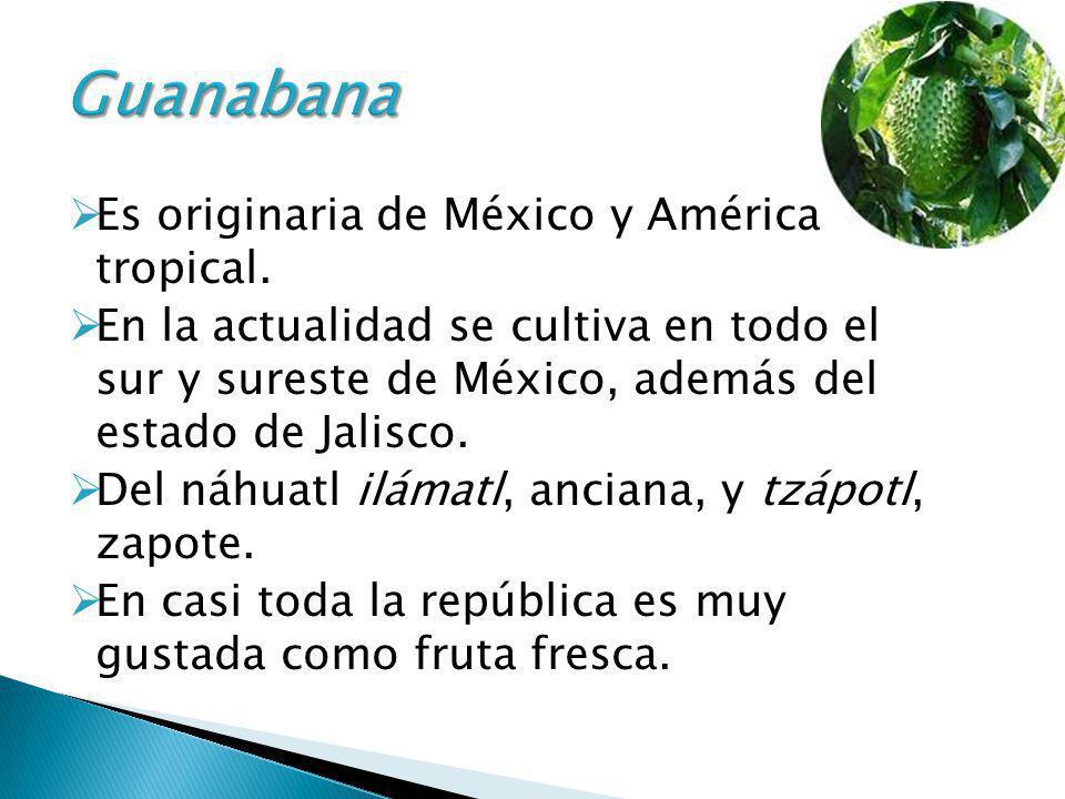 Guanabana Es originaria de México y América tropical.