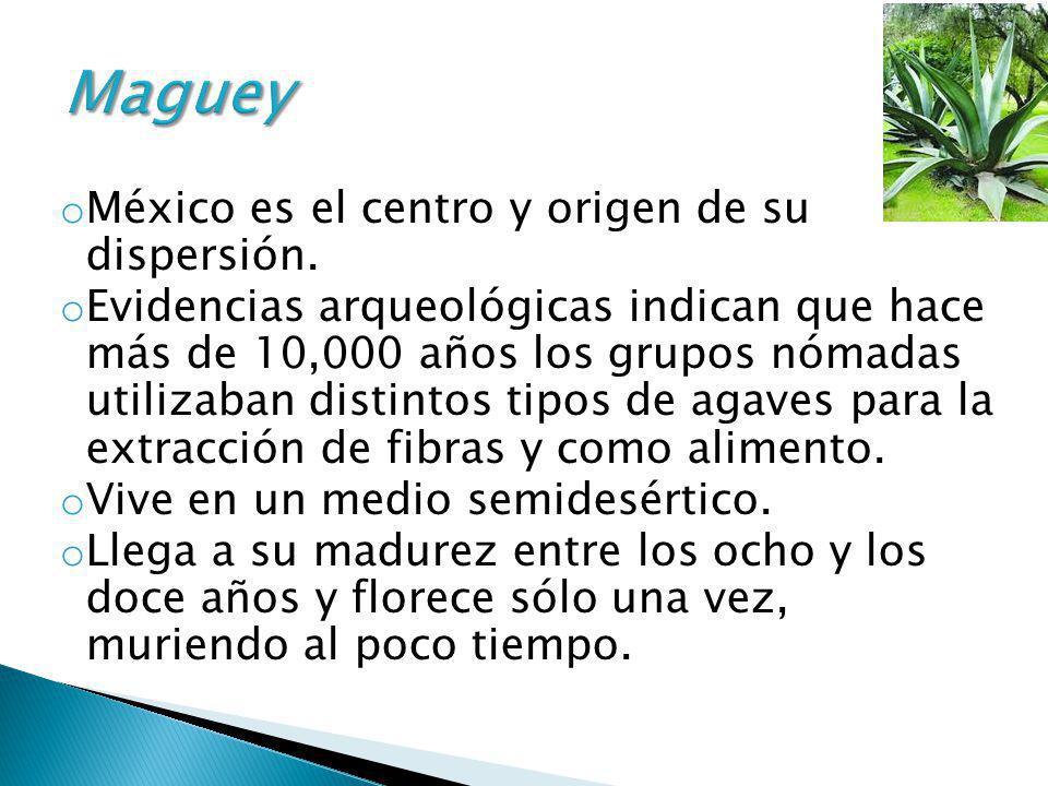 Maguey México es el centro y origen de su dispersión.