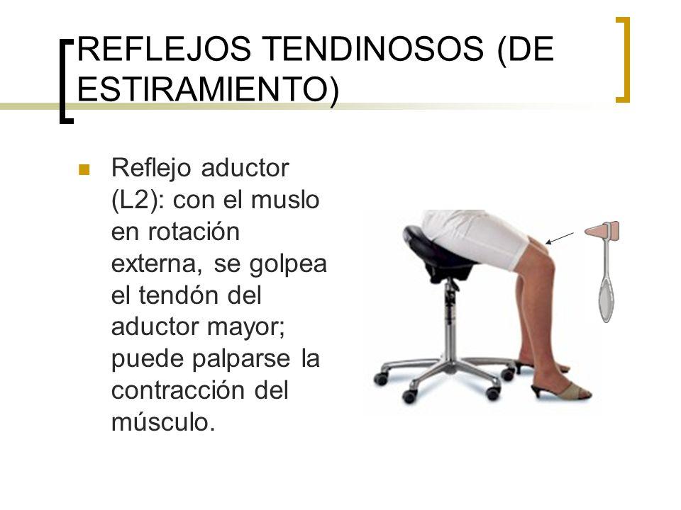 REFLEJOS TENDINOSOS (DE ESTIRAMIENTO)