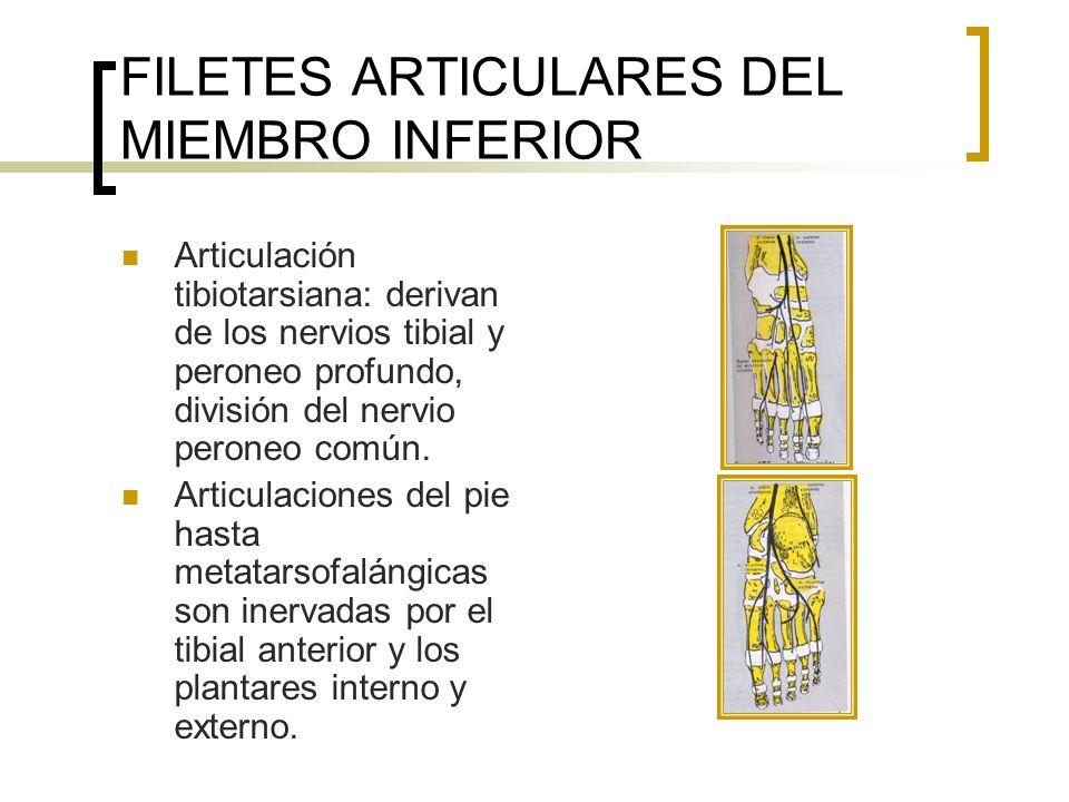 FILETES ARTICULARES DEL MIEMBRO INFERIOR