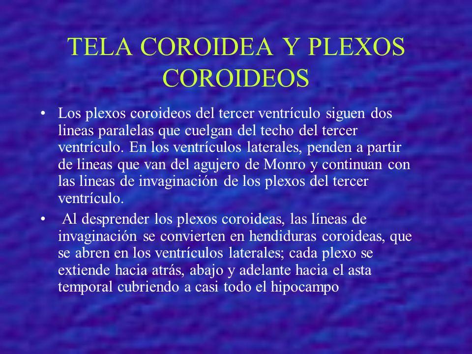 TELA COROIDEA Y PLEXOS COROIDEOS