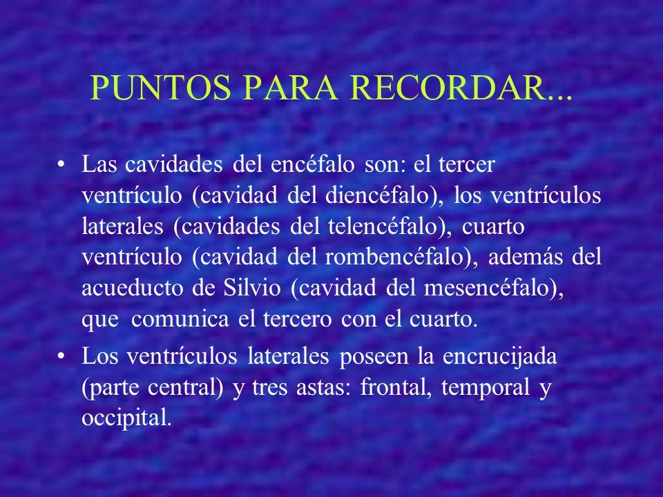 PUNTOS PARA RECORDAR...