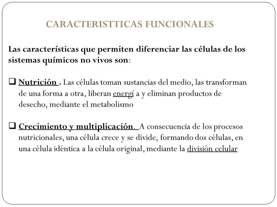 CARACTERISTTICAS FUNCIONALES
