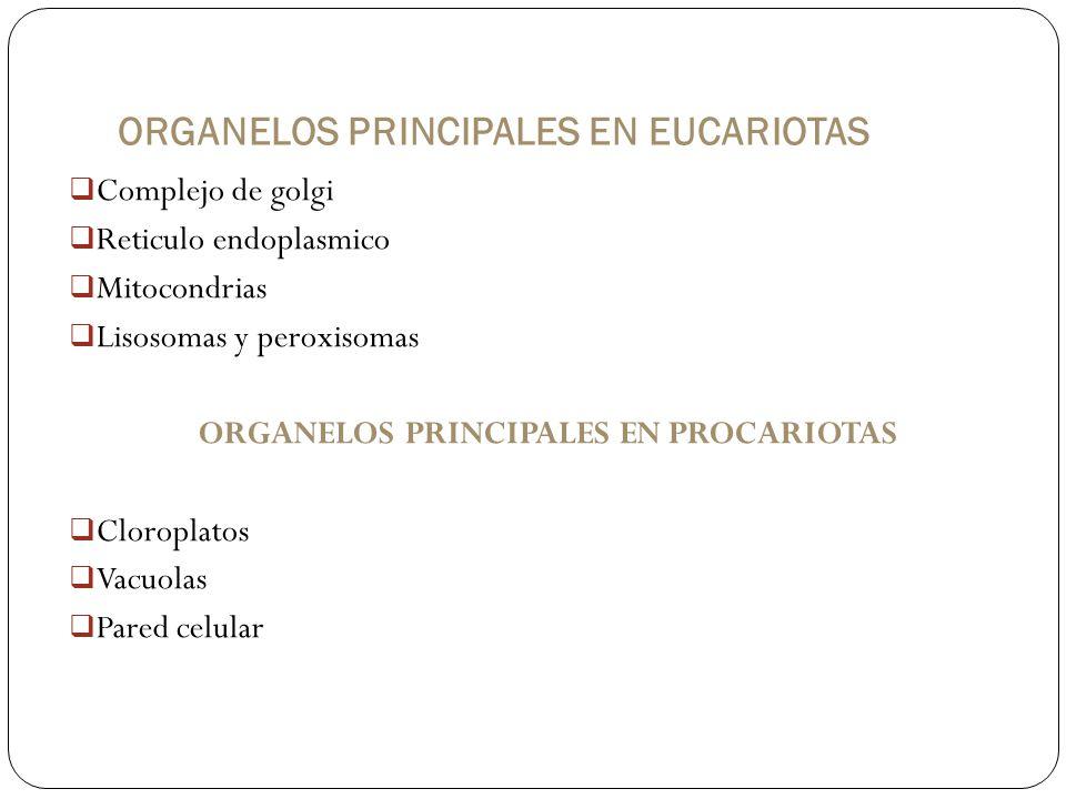 ORGANELOS PRINCIPALES EN EUCARIOTAS
