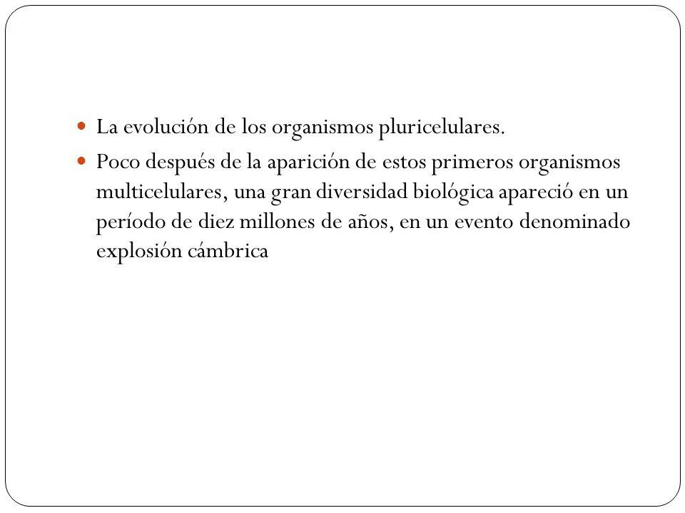 La evolución de los organismos pluricelulares.