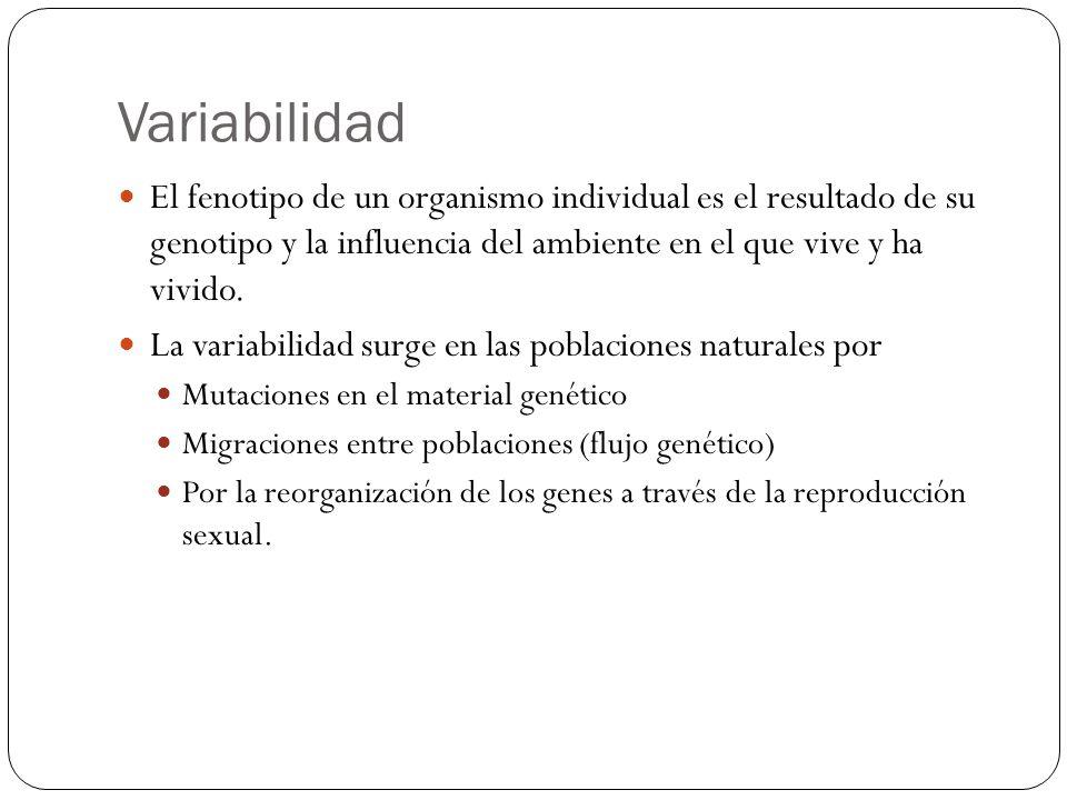 Variabilidad El fenotipo de un organismo individual es el resultado de su genotipo y la influencia del ambiente en el que vive y ha vivido.