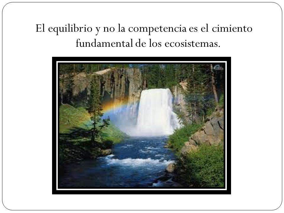 El equilibrio y no la competencia es el cimiento fundamental de los ecosistemas.