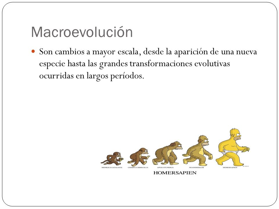 Macroevolución