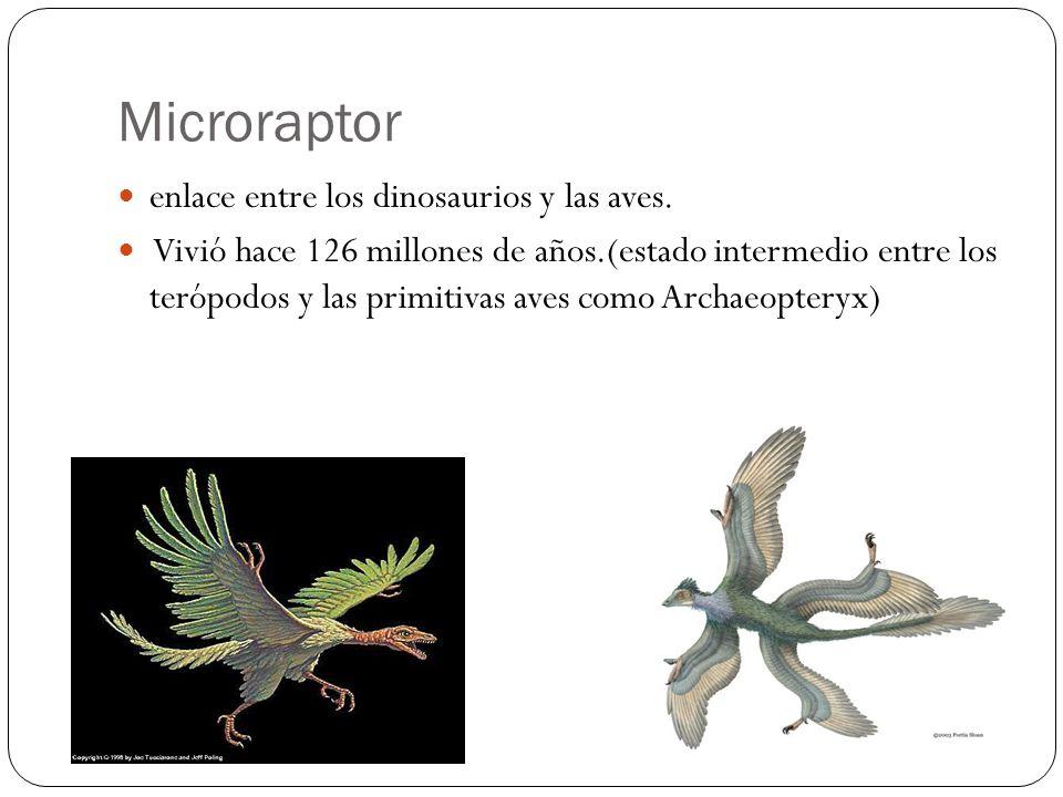 Microraptor enlace entre los dinosaurios y las aves.