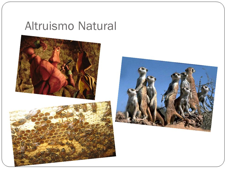 Altruismo Natural