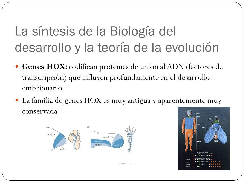 La síntesis de la Biología del desarrollo y la teoría de la evolución