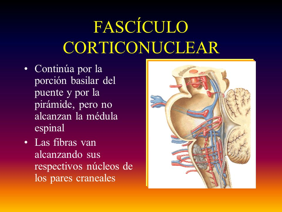 FASCÍCULO CORTICONUCLEAR