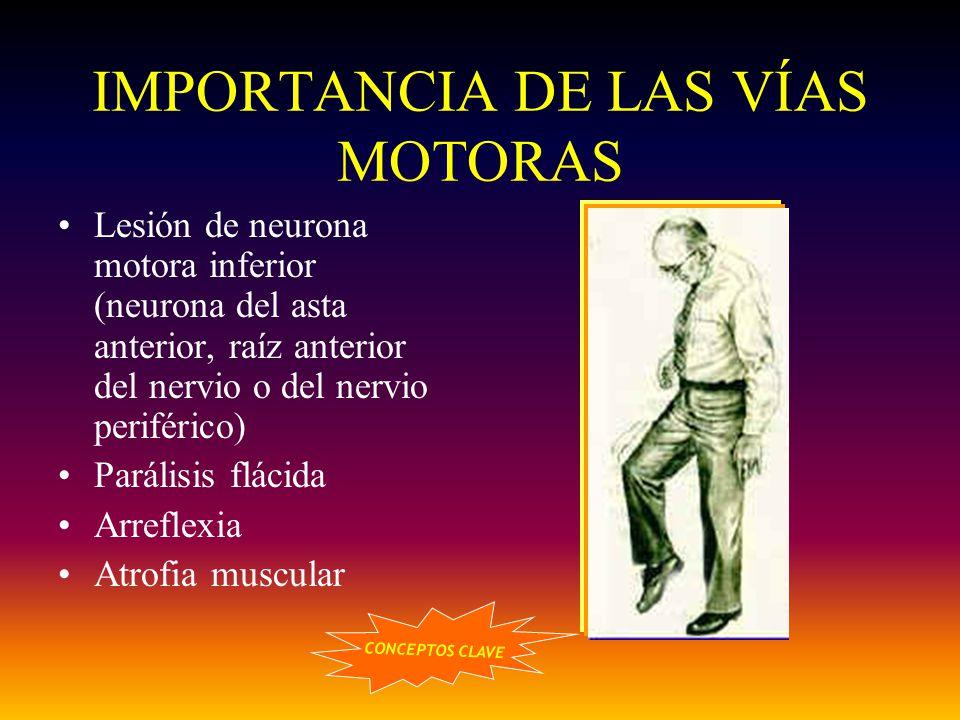 IMPORTANCIA DE LAS VÍAS MOTORAS
