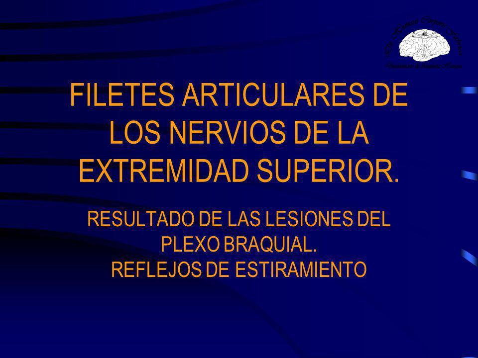 FILETES ARTICULARES DE LOS NERVIOS DE LA EXTREMIDAD SUPERIOR.