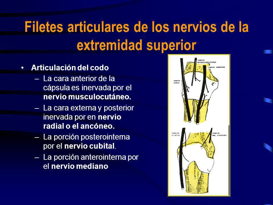 Filetes articulares de los nervios de la extremidad superior