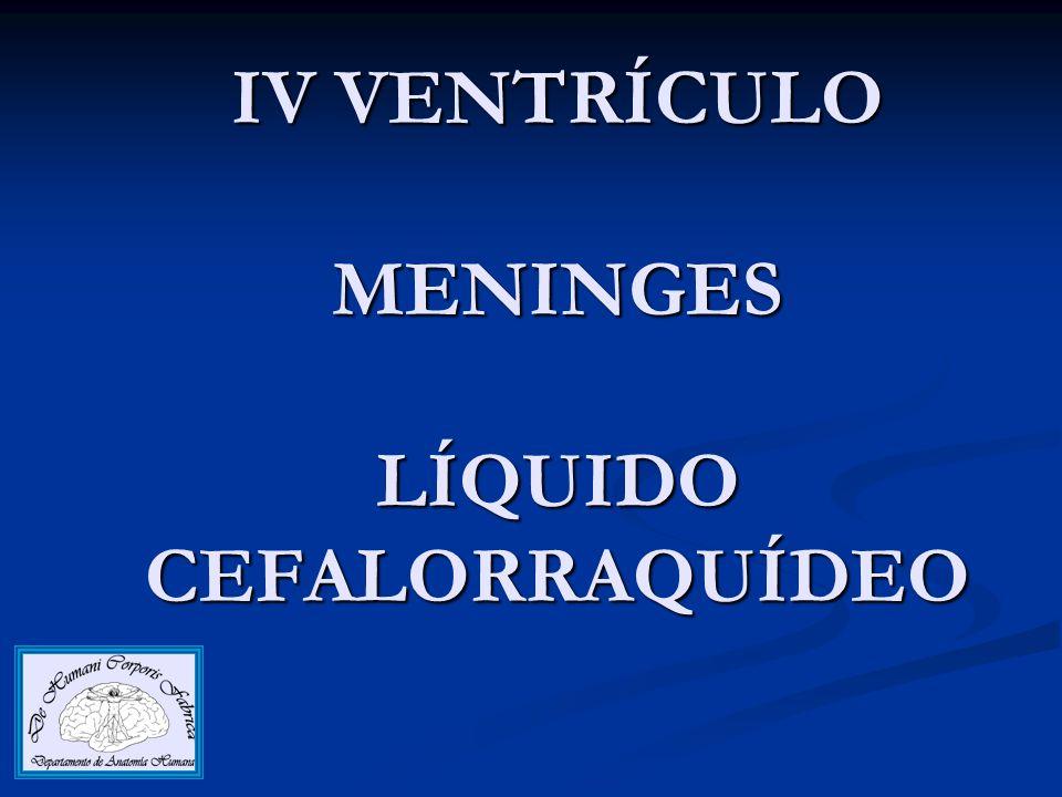 IV VENTRÍCULO MENINGES LÍQUIDO CEFALORRAQUÍDEO