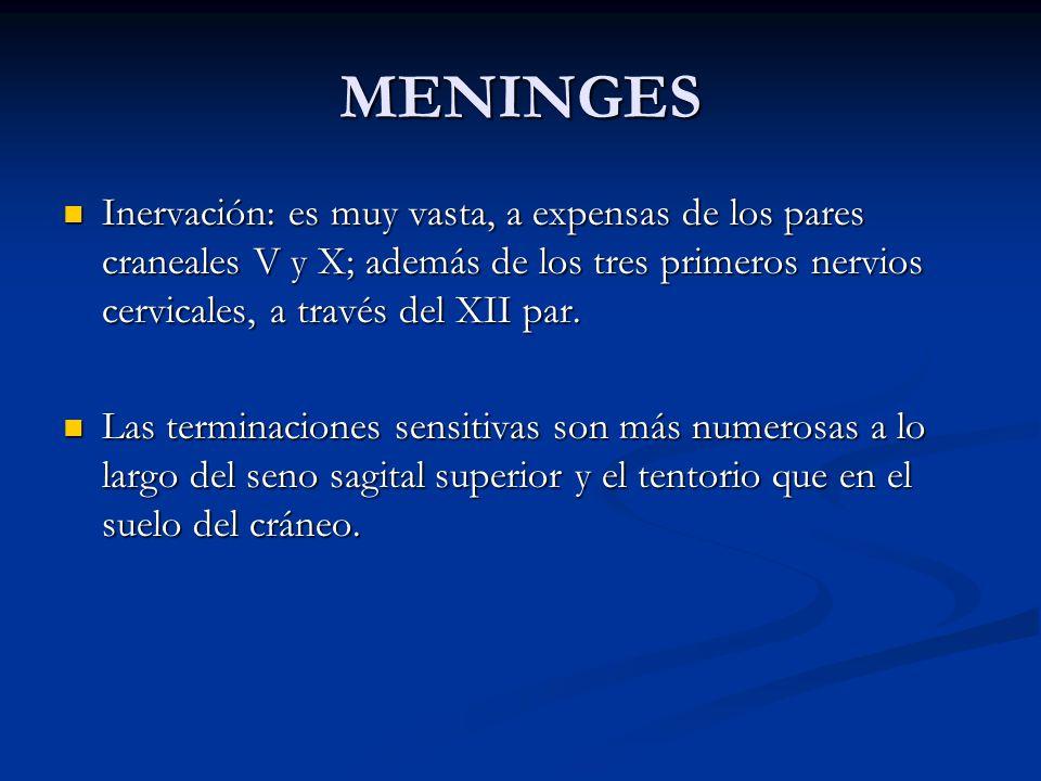 MENINGES Inervación: es muy vasta, a expensas de los pares craneales V y X; además de los tres primeros nervios cervicales, a través del XII par.