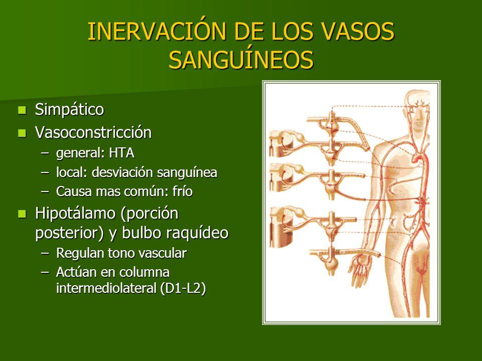 INERVACIÓN DE LOS VASOS SANGUÍNEOS