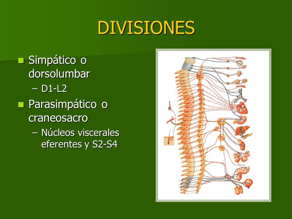 DIVISIONES Simpático o dorsolumbar Parasimpático o craneosacro D1-L2