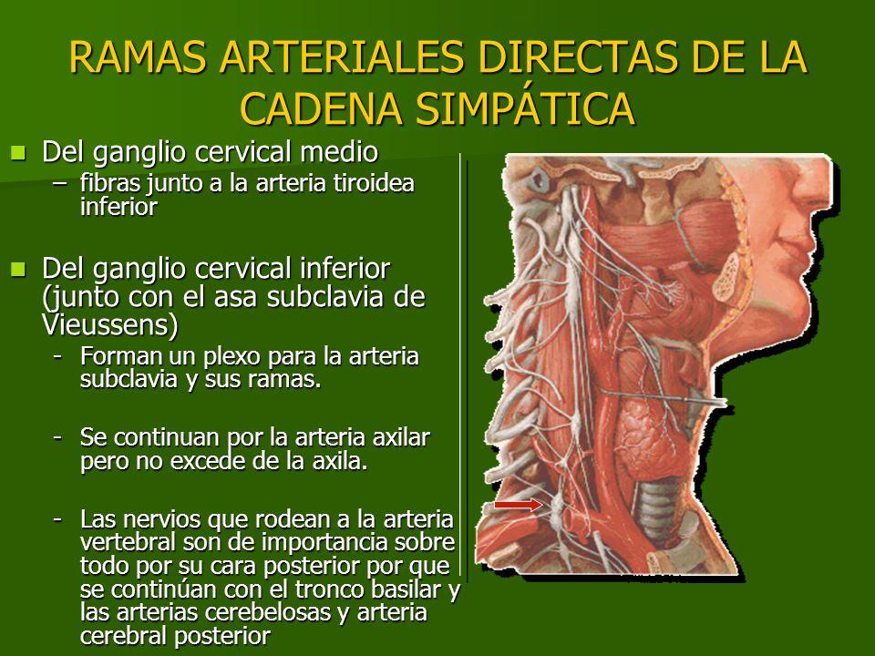 RAMAS ARTERIALES DIRECTAS DE LA CADENA SIMPÁTICA
