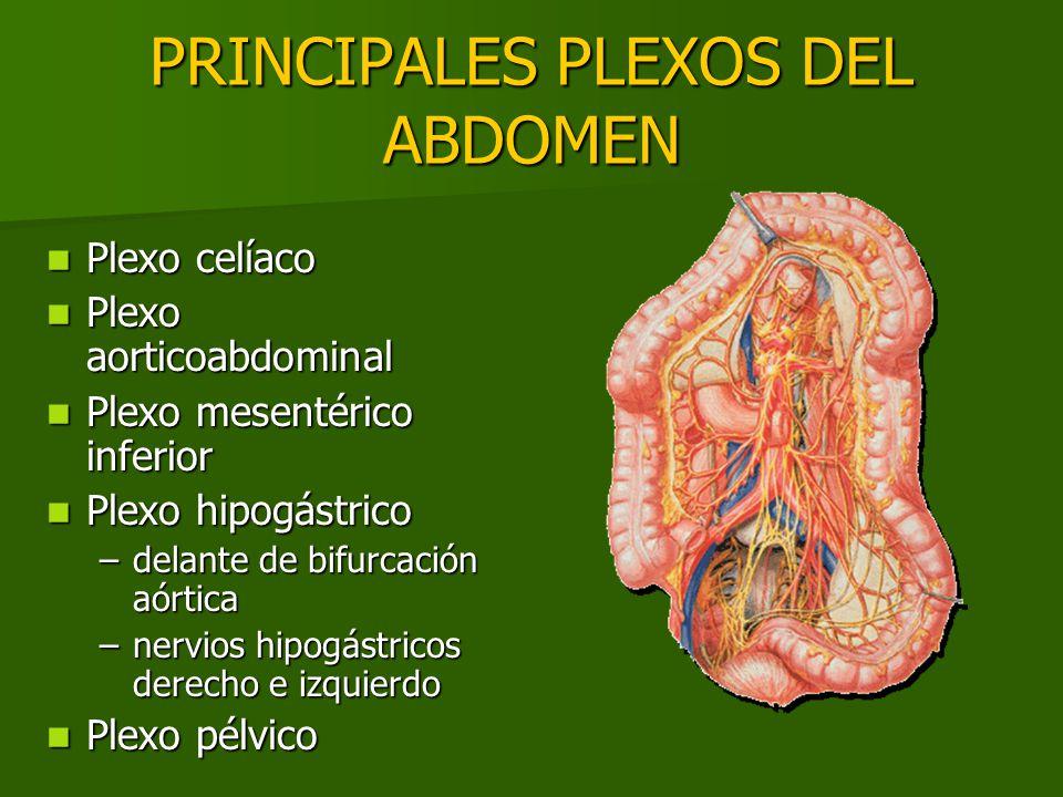 PRINCIPALES PLEXOS DEL ABDOMEN