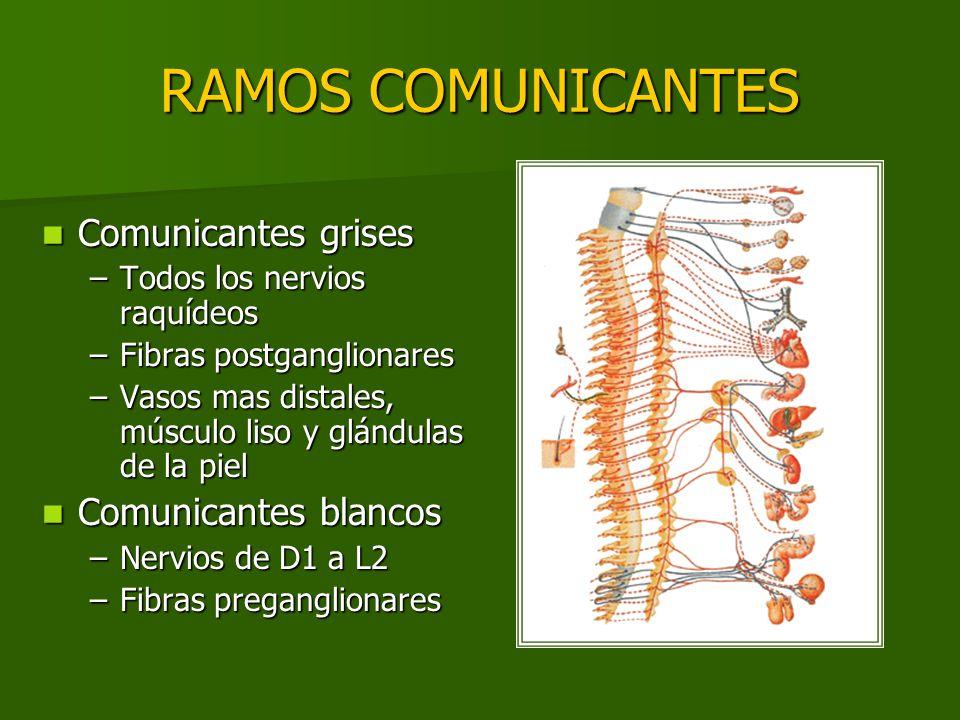 RAMOS COMUNICANTES Comunicantes grises Comunicantes blancos