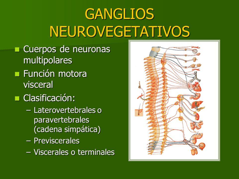 GANGLIOS NEUROVEGETATIVOS